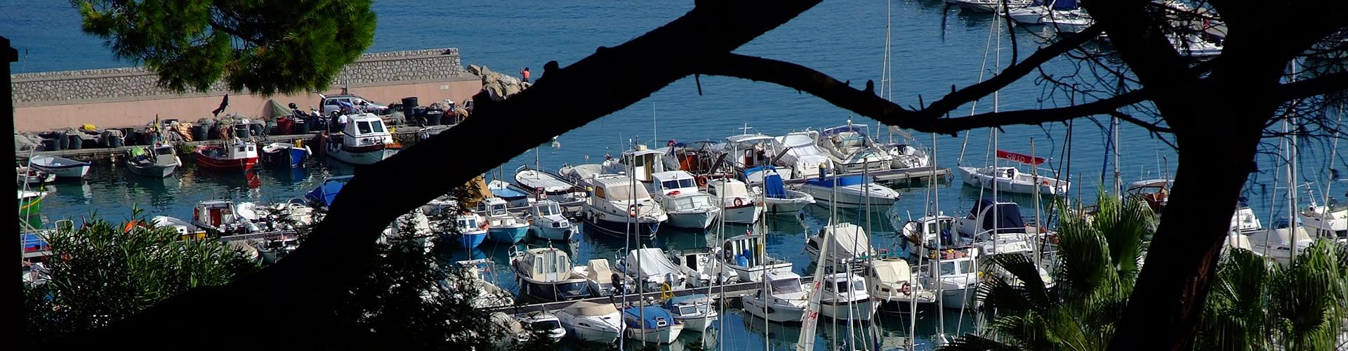 Affacciandosi dalla pineta si scorge il caratteristico porto